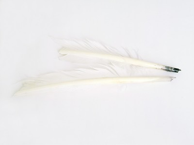 Pre-Cut Feather Writing Quills